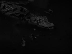 vlcsnap-2015-04-24-07h07m04s86